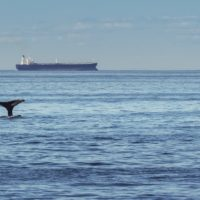 Slowing Ships for Whales