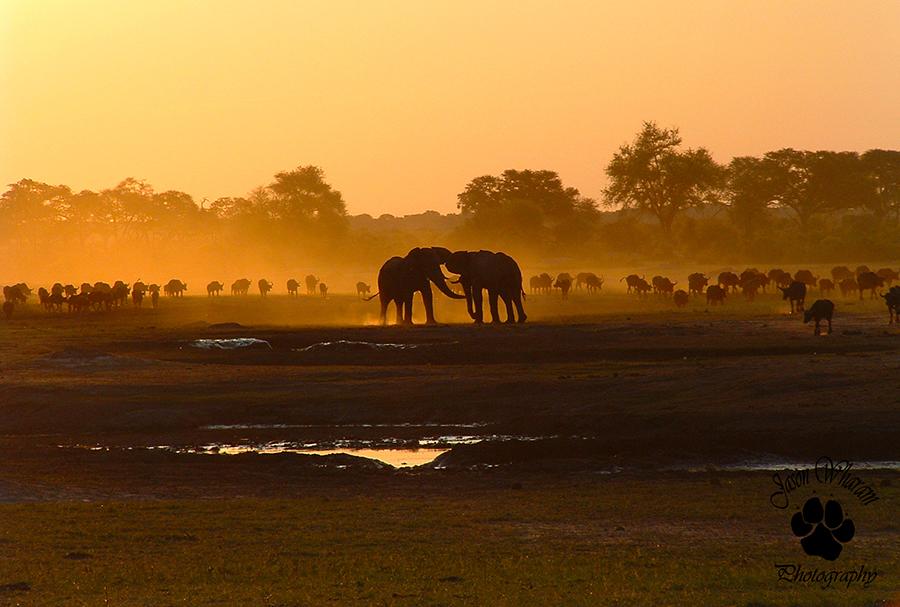 Elephants at Sunset, Kennedy Vlei by Jason Wharam
