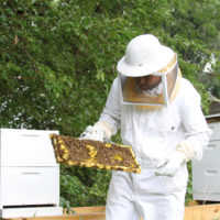 Avoiding Colony Collapse Disorder with Privately Owned Honeybees