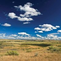 Restoring the American Serengeti