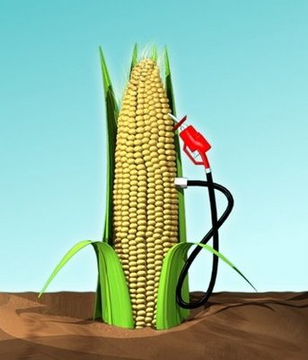 corn ethanol essay View this term paper on corn ethanol the flawed argument this is complimented by thornton's 2006 concise detraction of ethanol this article serves as reinforcement.