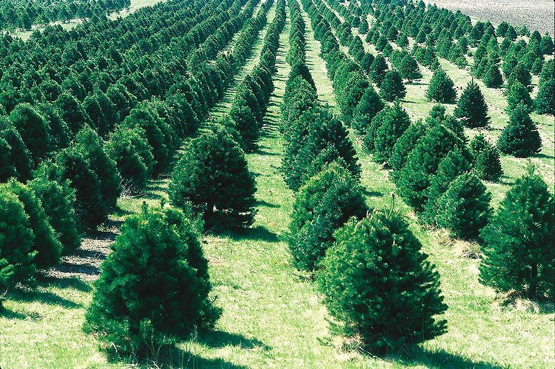Christmas Trees: Real or Fake? | PERC – The Property and ...