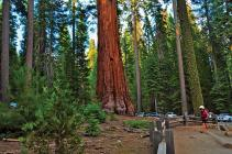 Mariposa Grove in Yosemite National Park. Photo courtesy of faungg's photos.